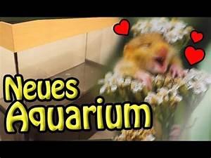 Pflegeleichte Haustiere Wohnung : neues axolotl zuhause einkaufen f r haustiere wohnung kleiner einblick in den umzug youtube ~ Yasmunasinghe.com Haus und Dekorationen