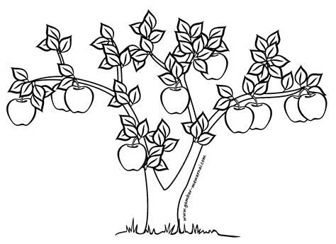 contoh gambar mewarnai pohon buah