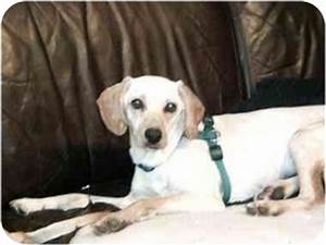 Dakota | Adopted Puppy | Jersey City, NJ | Italian ...