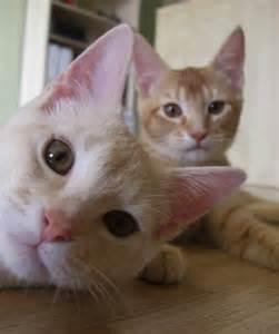 cat bomb animals 22 photobombs by cats amazing creatures