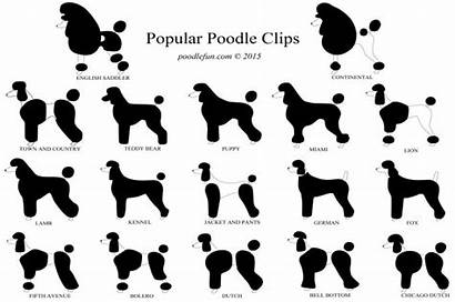 Poodle Haircuts Poodles Clips Cuts Grooming Chart
