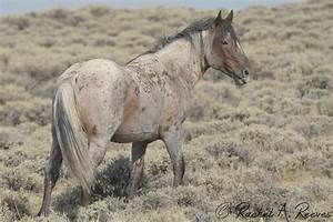 Wild Horse Behavior | Rachel Reeves Photography  Wild