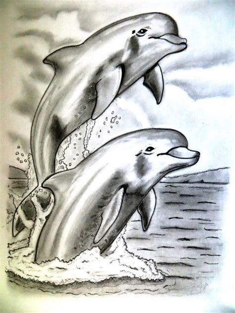 pencil drawings  dolphins drawing art pencil drawings