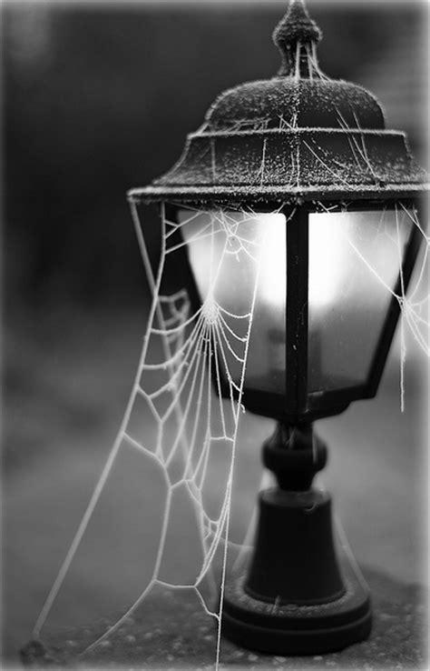 street light cobwebs pictures   images