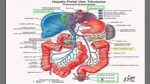 Portal Hypertension I- best HD video explanation ever ...