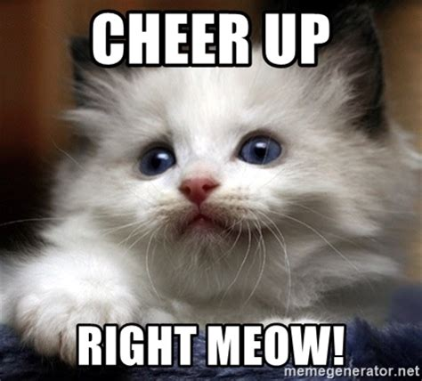 Cheer Up Cat Meme - cheer up cat pictures to pin on pinterest pinsdaddy