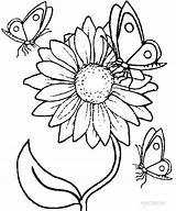 Sunflower Line Drawing Coloring Printable Pages Getdrawings sketch template