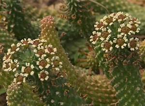 Comment Entretenir Un Cactus : comment entretenir les cactus et les succulentes ~ Nature-et-papiers.com Idées de Décoration
