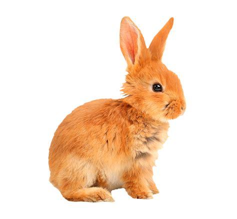 wallmania sticker konijn