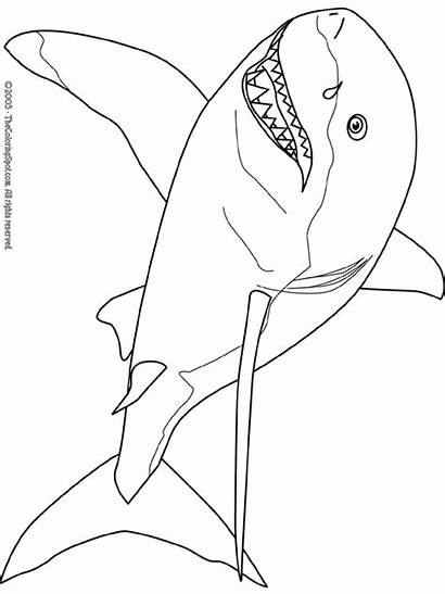 Shark Coloring Pages Colouring Stories