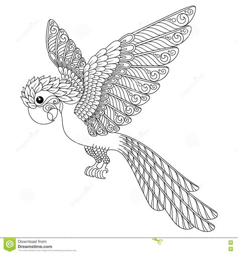 hand drawn parrot stock vector image  coloring