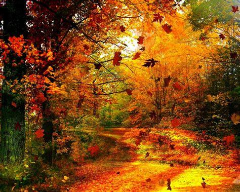 Autumn Wind : Wallpapers13.com