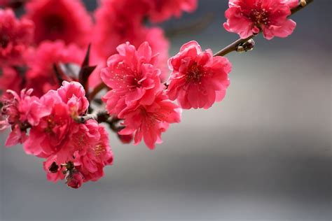 Fond D écran Fleur Le Fond D 233 Cran Fleur Qui Donne De Grands Sourires Obsigen
