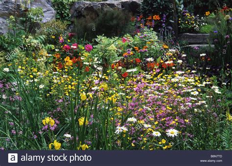 flowers and cottage garden flowery mead plants summer