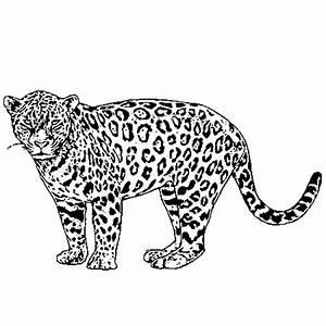 Dessin Jaguar Facile : coloriage jaguar en ligne gratuit imprimer ~ Maxctalentgroup.com Avis de Voitures