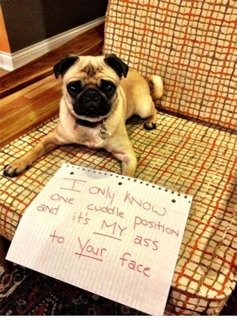 bad dogs    funny   punished boredbug