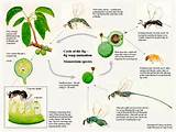 Pictures of Wasp Life Cycle