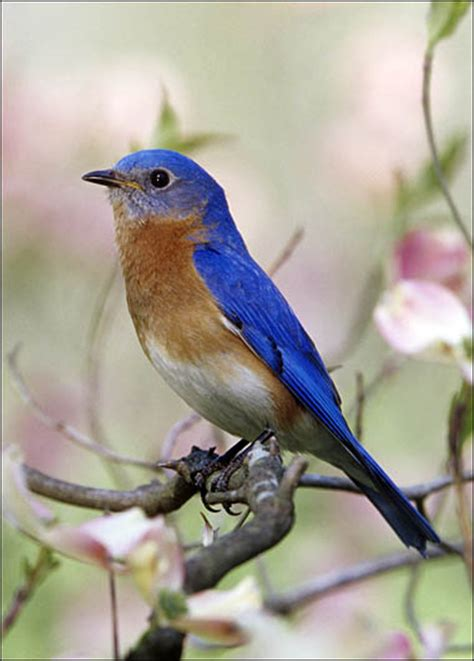decorating everyday bluebird of happiness