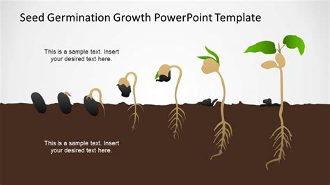 germination process seed  plant timeline slidemodel