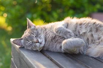 Cat Sunset Bench Lying Backlight Adorable