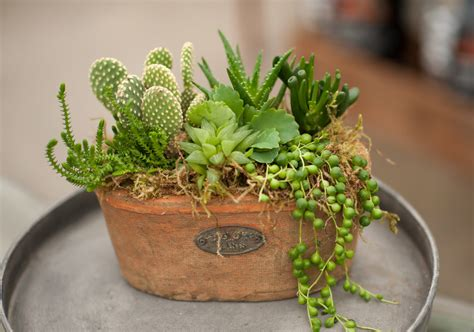 rustic plants create a rustic succulent planter garden house home tips west coast gardens
