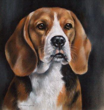 carole anne adlington pastel dog portraits beagle
