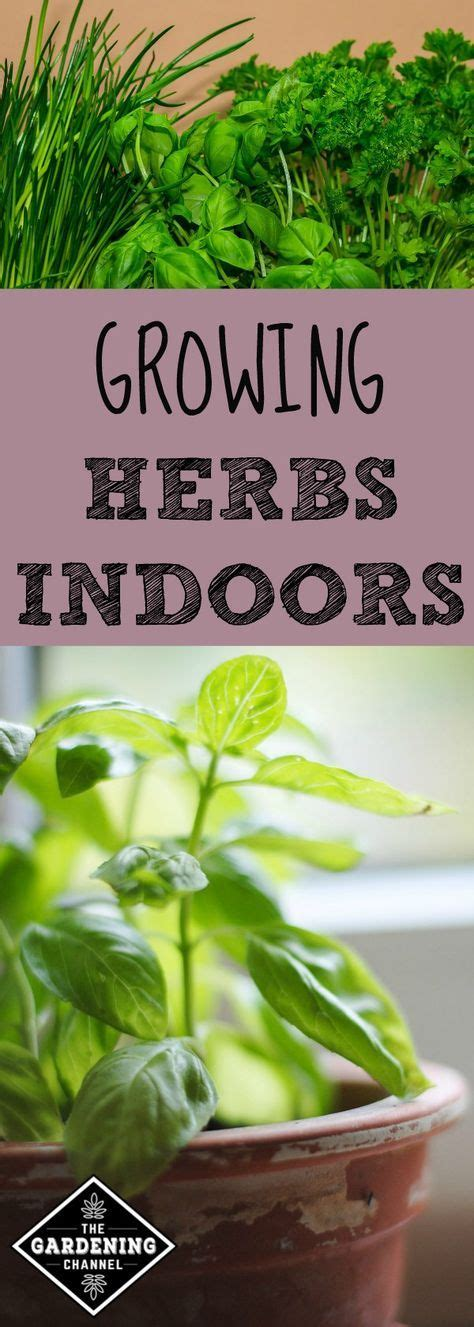 Herbs That Can Grow Inside by Best 25 Growing Herbs Indoors Ideas On Indoor