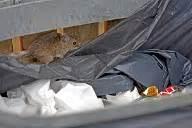 Ratten Bekaempfen Und Aus Dem Haus Vertreiben by Sch 228 Dlinge Maden Ameisen Und Kakerlaken Bek 228 Mpfen