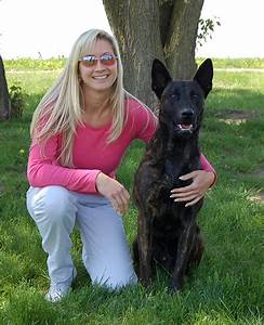 personal protection dog training houston tx thinglink With dog training houston