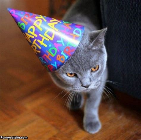 cat birthday cute cat birthday quotes quotesgram
