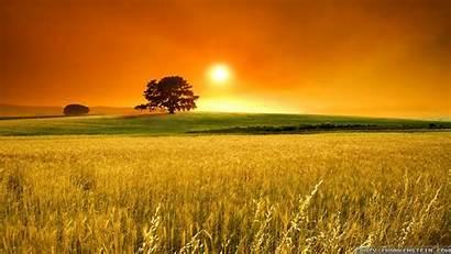 Summer Landscape Wallpapers Frankenstein Crazy Field Sunset