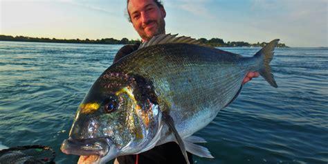cuisiner une dorade les bas de ligne pour pêcher la dorade royale en bateau
