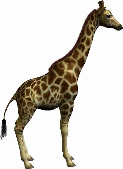 Animal Clipart Clip Giraffe Graphics Resolution Clipartmag