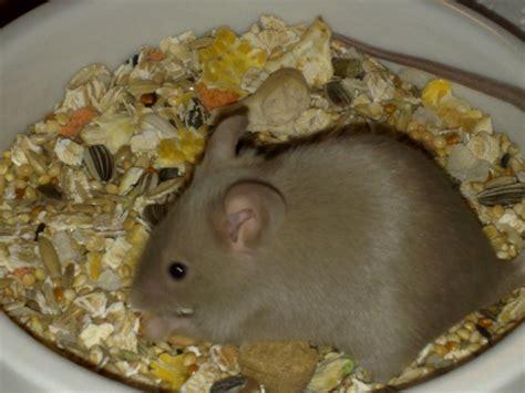 Wie Viel Kostet Eine Maus Als Haustier by Reptilien Futtertiere Tieranzeigen Seite 2