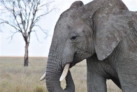 gambar margasatwa binatang menyusui taman nasional