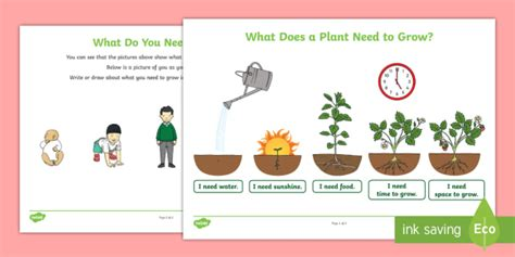 new what do you need to grow worksheet well being