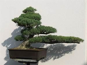 Pflanzen Für Japanischen Garten : bonsai aus dem japanischen garten in bad langensalza foto ~ Lizthompson.info Haus und Dekorationen