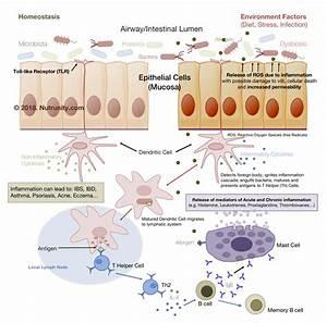 The Inflammation Process