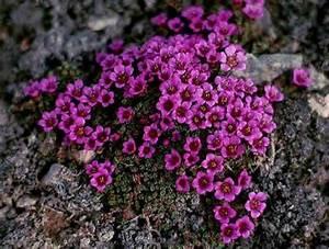 Tundra Plants Arctic Tundra Plants Biome Images