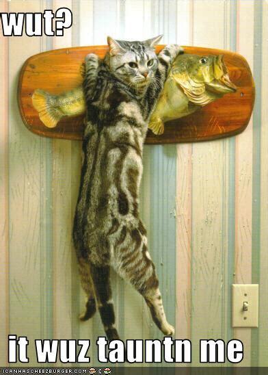 funny image fish kidsaquariumsquotes
