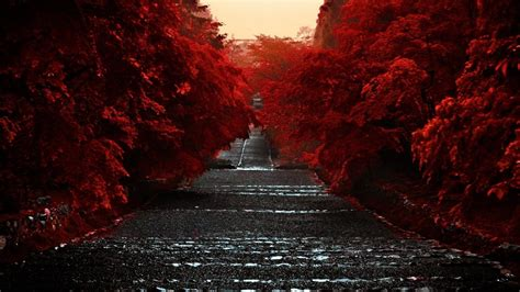 road  red autumn trees hd dark aesthetic wallpapers