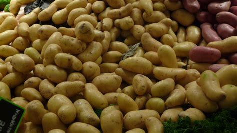 amandine pomme de terre wikip 233 dia