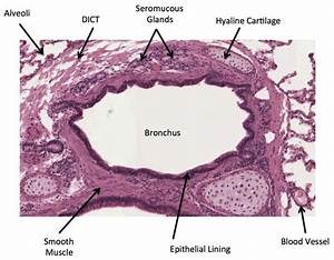 27 Best Images About Histology On Pinterest
