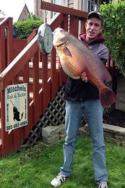 drum freshwater record state james fish yorker lands vanarsdall provided game ny charlie