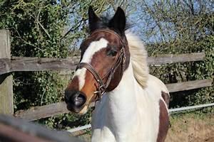 Vendre Sur Facebook Particulier : chevaux vendre en lorraine ~ Medecine-chirurgie-esthetiques.com Avis de Voitures