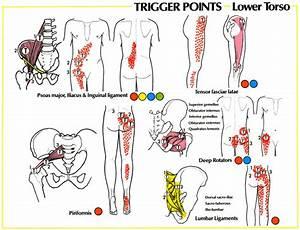 Sciatic Nerve Hip Pain | Sciatica Pain Referral Patterns ...