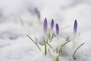 Blumen Im Winter : callas blume richtig berwintern ~ Eleganceandgraceweddings.com Haus und Dekorationen