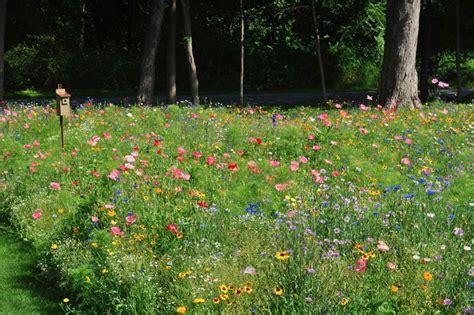 wildflower americanmeadows