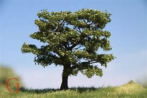 Apfelbaum Schneiden Sommer : apfelbaum sommer gatra modellbau union ~ Lizthompson.info Haus und Dekorationen