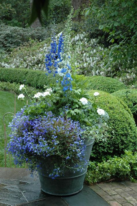 plant combinations  containers hgtv